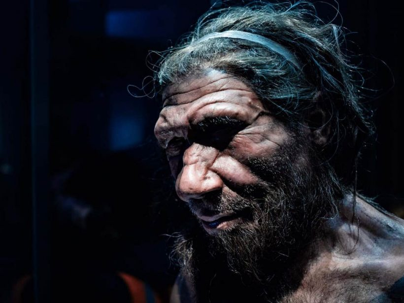 Wiped out: headshot of male Neanderthal replicate in Natural History Museum, London ( Shutterstock/Chettaprin P )